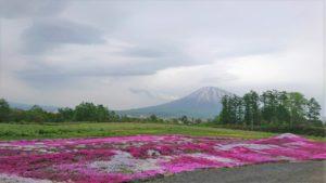 三島さん 芝桜